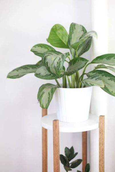 plant stands rustic